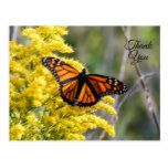 Thank You Monarch Butterfly Postcard