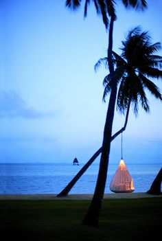 Patio - A resin hanging chair from Dedon suspended from a palm tree