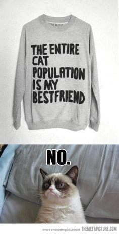 Me encanta este gato que tiene mi actitud ante la vida.