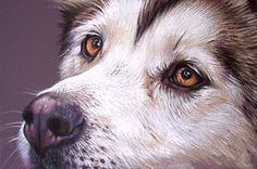 Siberian Husky Drawing  - Siberian Husky Fine Art Print