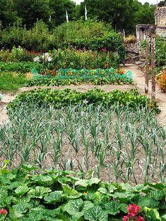 Jardim comestivel
