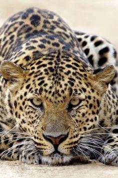 ●•‿✿⁀Animal Print‿✿⁀•●