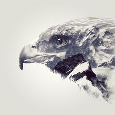 Nick Whiteley Design, Double Exposure Eagle