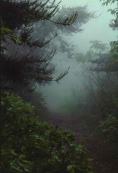 fog. something beautiful about it