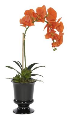 "awesome  Vibrant orange phalaenopsis orchid blooms Green succulent accent Black ceramic urn (5 1/2"" diameter x 7"" tall)   https://www.silkyflowerstore.com/product/house-of-silk-flowers-artificial-orange-phalaenopsis-orchid-in-black-ceramic-urn/"