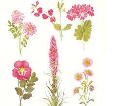BOTANICAL FLOWER PRINT   1930's antique by BrightonBeachBazaar, £7.00