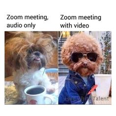 Work-from-home memes that are hilariously accurate Funny Dog Memes, Really Funny Memes, Memes Humor, Stupid Funny Memes, Funny Laugh, Funny Relatable Memes, Funny Dogs, Funny Stuff, Pet Memes