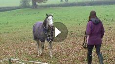 """""""Lange nicht gesehen!"""" – Die Reaktion des Pferdes, als es seine Besitzerin erkennt, ist zu goldig!"""