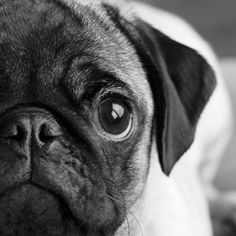 """""""If a dog will not come to you after having looked you in the face, you should go home and examine your conscience."""" - Woodrow Wilson"""