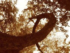 tree in sj