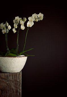 Witte orchidee in pot op een stoere sokkel