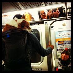 backpack corgi on a train
