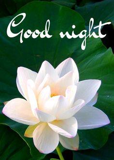 Sweet Night, Good Night Sweet Dreams, Good Night Moon, Good Night Image, Good Morning My Friend, Morning Wish, Good Night Flowers, Good Knight, Morning Thoughts