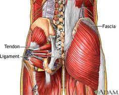 How Are Fibromyalgia and Myofascial Pain Syndrome Different?: The fascia is a body-wide web of connective tissues.