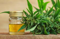 Hemp Oil vs CBD Oil - similar yet different - Natural Luxury Endocannabinoid System, Natural Antibiotics, Cbd Hemp Oil, Cannabis Plant, Healthy Oils, Oil Benefits, Cancer Cure, Hair Health, Natural Medicine