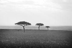 South Africa Plains --go on safari #travel #safari