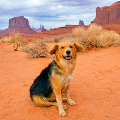 Steven Sable Photography - Arizona Dog Rescue. Photo money goes to help rescue abandoned dogs in the desert.