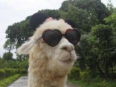 Sexy llama