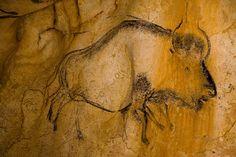 Le bison court sur les murs de la Grotte Chauvet - Pont d'Arc