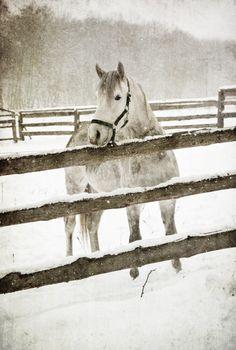 winter ❄︎ farm
