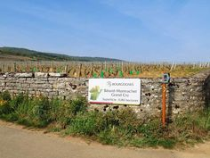 Video: a Bird's-Eye View on Burgundy's Vineyards