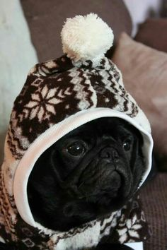 Snug as a pug.