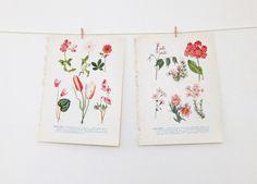 Vintage Flower Illustrations £7.00