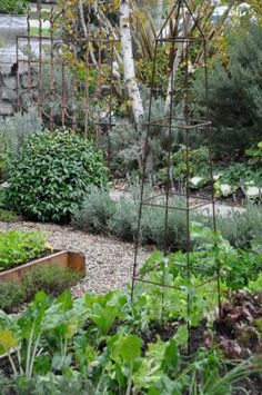 French Potager Garden 22