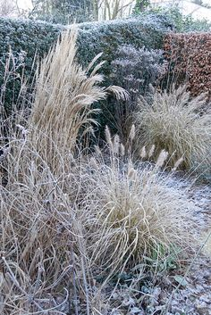 Alpine Meadow, Ornamental Grasses, Mother Earth, Coastal, Most Beautiful, Herbs, World, Plants, Silhouettes
