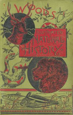 Rev. J.G. Wood's Illustrated Natural History is Featured Book for February 2012 | Binghamton University Libraries Special Collections