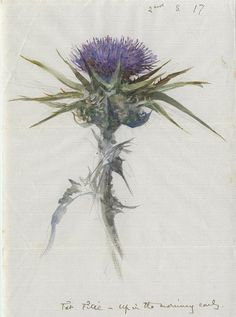 A thistle beautifully painted in watercolour by #JohnRuskin early one morning in 1870. @RuskinsFriends