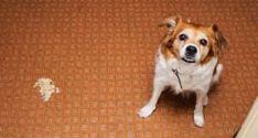 Dog Throwing Up White Foam: 11 Most Common Reasons Why Dog Sitting Rates, Maltese Dog Breed, Dog Throwing Up, Dog Grooming Shop, Dog Training, Training Tips, Homemade Dog Food, Dog Agility, Dog Walking