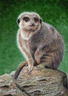 Meerkat Mini Painting, Acrylic on Canvas Board, Wildlife