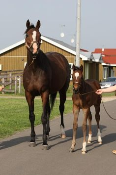 In Lingerie (USA), with her 2014 filly (JPN) by Frankel (GB)