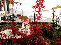 El rojo chillón es tendencia este otoño y nuestro arce japonés lo tiene claro.  Descubre otros colores otoñales aquí en #InsulaBarataria. #slowtravel #slowlife http://ift.tt/2fapCFW #Belmonte #Cuenca #LaMancha #elpueblomasbonito #rurallife