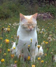 Cottage core Cat in Flower Field Aesthetic Photography - Katzenrassen Beautiful Cats Cat Aesthetic, Nature Aesthetic, Disney Aesthetic, I Love Cats, Cute Cats, Cute Kitty, Pretty Cats, Cat Ideas, Baby Animals