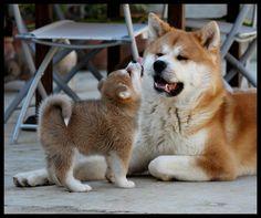 Cucciolata adorabile