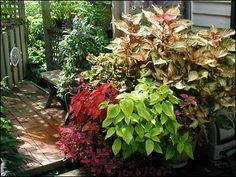 Pots of plants will bring instant color to your outdoor room.  Plus, you can move them around at will depending on your mood or outdoor activity.  Be sure to pick up colorful plants that work for the spot they will be in.