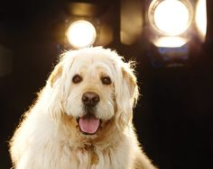 Lights...camera....action! I think my pup would be perfect for show biz! How to Break a Dog Into Show Business
