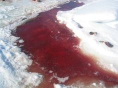 "malformalady: "" Blood puddle in the snow during the seal hunt. """