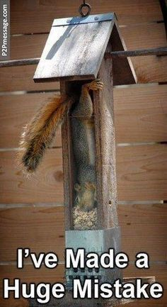 Squirrel got stuck. Click to see more and comment...