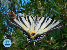Activiteiten-op-Kreta-3 Crete Greece, Snorkelling, Walking In Nature, Island, Animals, Beautiful, Crete, Animales, Animaux