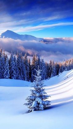 Conifer forest clearing hills snow winter mountains – Irina Harea – Wallpapers Designs - front yard landscaping ideas with rocks Winter Pictures, Nature Pictures, Beautiful Pictures, Winter Photography, Nature Photography, Free Winter Wallpaper, Conifer Forest, Wallpaper Fofos