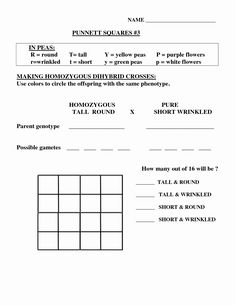 Dihybrid Cross Worksheet Answers New Punnett Square ...