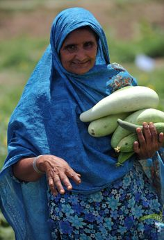 Pakistan: A rural woman harvesting vegetables in a field as part of the Women Open School (WOS), where women gain experiential learning and skill development on pesticide risk reduction, kitchen gardening and small enterprise development (goat and chicken farming and vegetable seed production).  ©FAO/Farooq Naeem  www.fao.org
