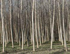 Segni d'alberi
