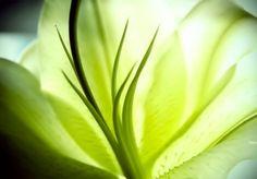 1366x768 Zoom In Flower Wallpaper