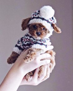 #puppies #puppy #dogs #cute #cuteanimals Funny Weather, Maltese Dogs, Hate Summer, Cute Puppies, Its Cold Outside, Puppy Love, The Outsiders, Teddy Bear, Baby Animals
