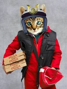 Clothed Cats pizza cat Sharing is caring, don't forget to share ! Cute Cats, Funny Cats, Funny Animals, Cute Animals, Crazy Cat Lady, Crazy Cats, Maurice Careme, Cat Dressed Up, Pizza Cat