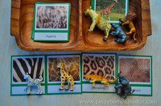Animal skin prints matching